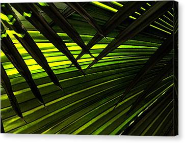Leaves Of Palm Color Canvas Print by Marilyn Hunt
