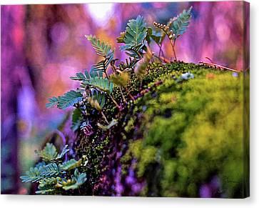 Leaves On A Log Canvas Print