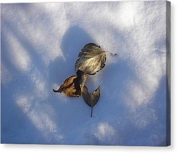 Leaves On Snow Canvas Print
