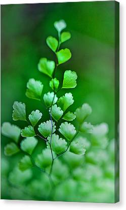 Leaves Rising Canvas Print
