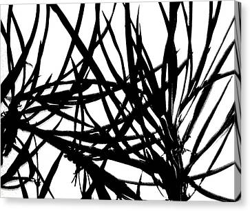 Lee Krasner Spider Plant Detail 1 Canvas Print by Dick Sauer