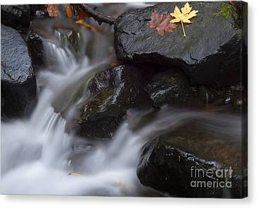 Maple Season Canvas Print - Left On The Rocks by Mike Dawson