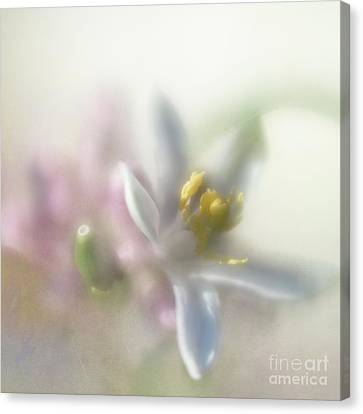 Canvas Print featuring the photograph Lemon Blossom by Elena Nosyreva