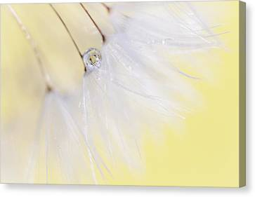 Shower Canvas Print - Lemon Drop by Amy Tyler