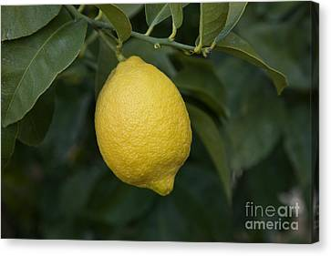 Lemon Lisbon Canvas Print