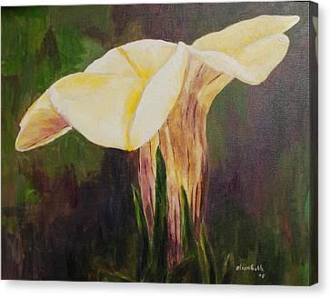 Lemon Plume Petunia Canvas Print by Beth Maddox