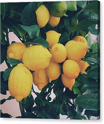 Lemon Tree Canvas Print by Happy Home Artistry