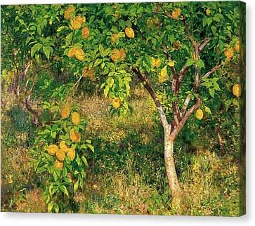 Canvas Print featuring the painting Lemon Tree by Henry Scott Tuke