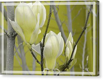 Canvas Print featuring the photograph Lemon Yellow by Athala Carole Bruckner