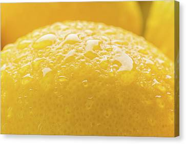 Lemon Zest Number 2 Canvas Print by Steve Gadomski