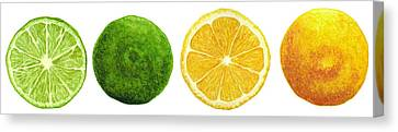 Lemons And Limes Canvas Print by Kathleen Skinner
