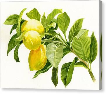 Lemons On A Branch Canvas Print by Sharon Freeman