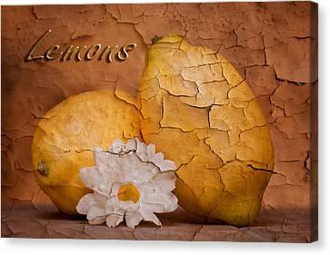 Peeling Canvas Print - Lemons With Daisy by Tom Mc Nemar