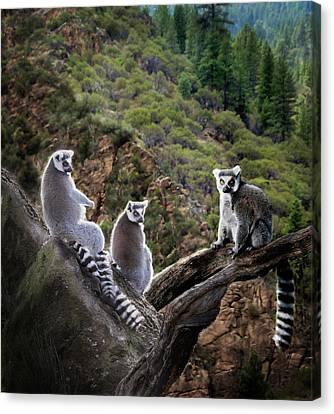 Lemur Family Canvas Print by Melinda Hughes-Berland