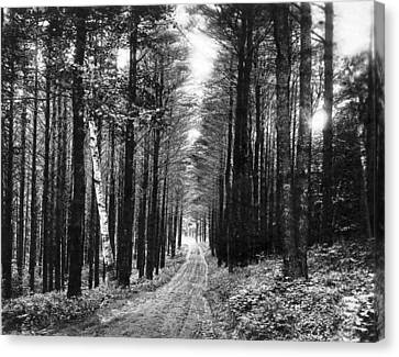 Lenox Country Road Canvas Print