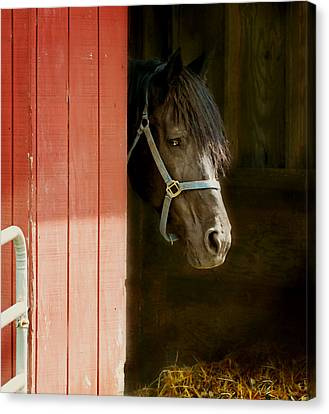 Horse Stable Canvas Print - Leo by Diana Angstadt