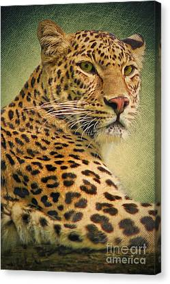 Leopard Canvas Print by Angela Doelling AD DESIGN Photo and PhotoArt