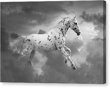 Leopard Appaloosa Cloud Runner Canvas Print by Renee Forth-Fukumoto