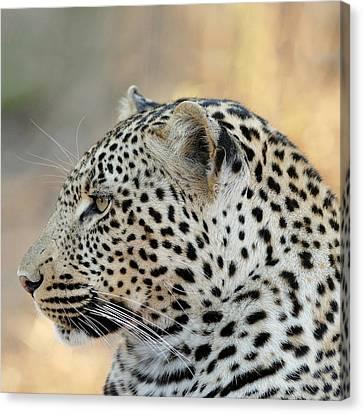 Leopard Canvas Print by Ellen Henneke