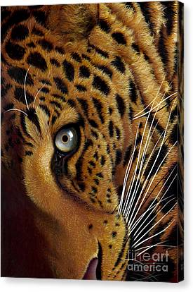 Leopard Canvas Print by Jurek Zamoyski