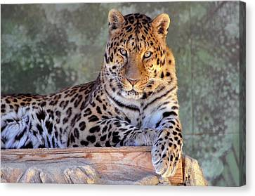 Leopard Canvas Print by Larry Holt