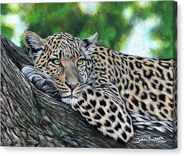 Leopard On Branch Canvas Print
