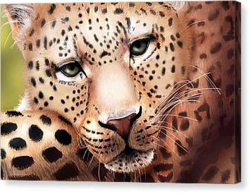 Leopard Resting Canvas Print