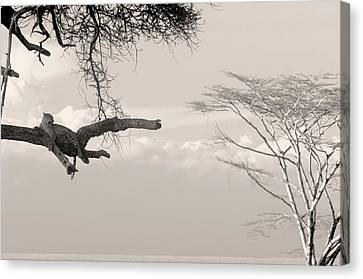 Leopard Resting On A Tree Canvas Print