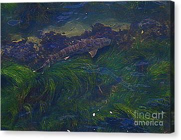 Leopard Shark Hunting Canvas Print by Craig Corwin