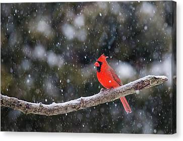Canvas Print featuring the photograph Let It Snow by Mircea Costina Photography