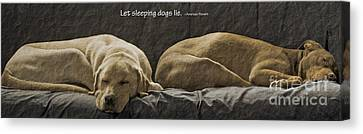 Let Sleeping Dogs Lie Canvas Print by Gwyn Newcombe