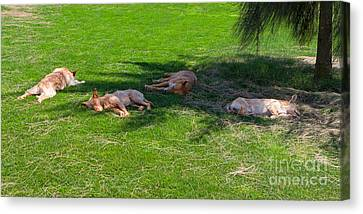 Let Sleeping Dogs Lie Canvas Print by Louise Heusinkveld