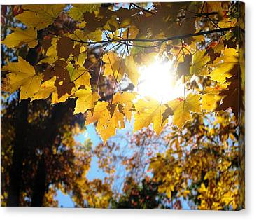 Let The Sun Shine In Canvas Print by Angela Davies