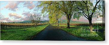 Let's Drive Through The Vineyard Canvas Print by Jon Neidert