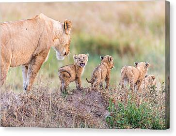 Let's Go Mom Canvas Print