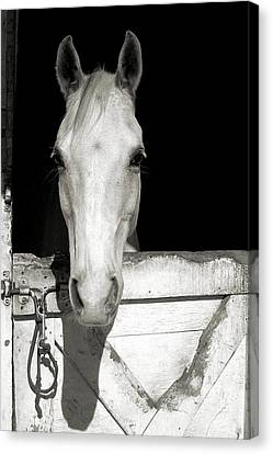 Lets Ride Canvas Print