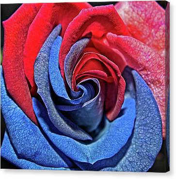 Canvas Print featuring the photograph Liberty Rose by Judy Vincent