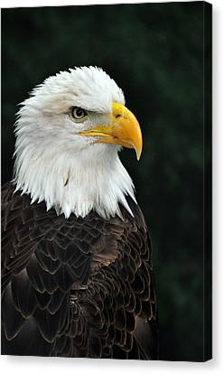 Liberty Three Canvas Print by Teresa Blanton