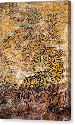 Canvas Print featuring the photograph Lichen Abstract, Bhimbetka, 2016 by Hitendra SINKAR