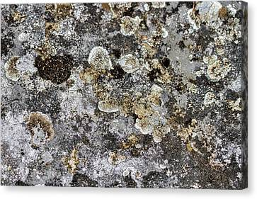 Canvas Print featuring the photograph Lichen At The Cemetery by Stuart Litoff