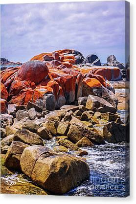 Lichen Covered Rocks Canvas Print