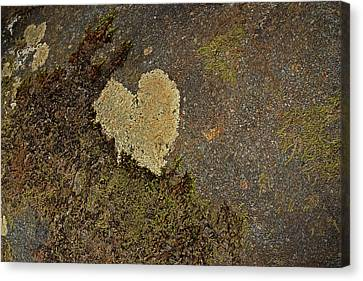 Canvas Print featuring the photograph Lichen Love by Mike Eingle