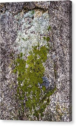 Lichen On Granite Canvas Print by Steven Ralser