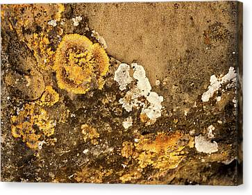 Canvas Print featuring the photograph Lichen On The Piran Walls by Stuart Litoff