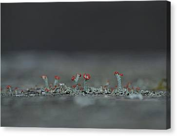 Lichen-scape Canvas Print