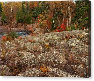 Lichen Temperance Canvas Print