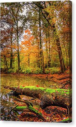 Canvas Print featuring the photograph Life Cycle by Dmytro Korol