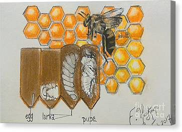 Life Cycle Of A Bee  Canvas Print