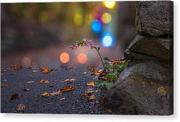 Life Finds A Way Canvas Print by Mary Almond