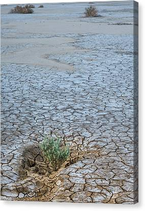Dry Lake Canvas Print - Life In A Dry Place by Joseph Smith